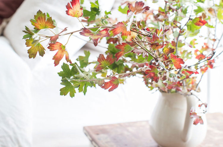 Image: http://www.vintagewhitesblog.com/2015/08/6-tips-for-simple-fall-decorating.html