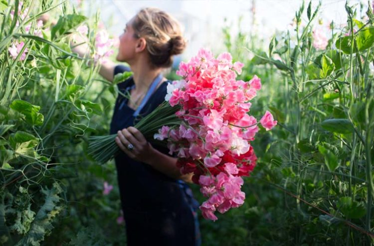 Image: Floret Flowers