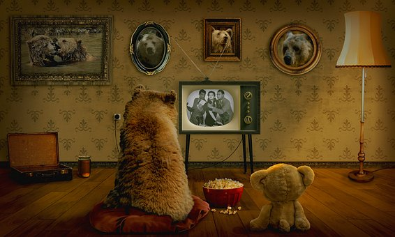 Bear watching tv
