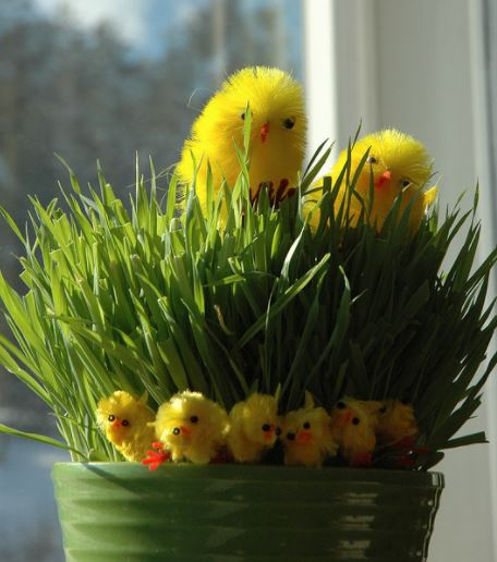 Easter around the world - grass