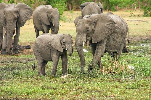 Animal mothers - elephants