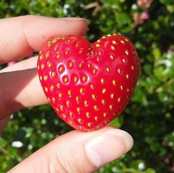 Ugly vegetables - Strawberry