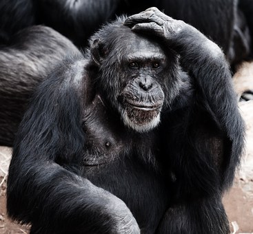 Left handed - Ape