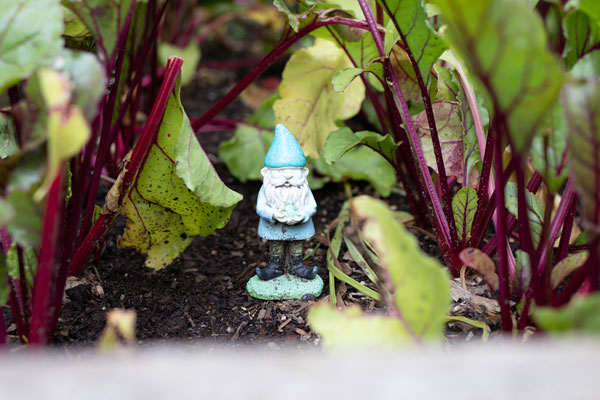 Gardening for kids - Gnome