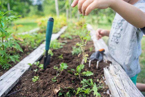Gardening for kids - plot
