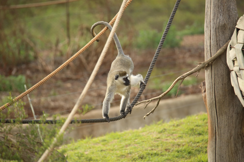 Zoo- monkey