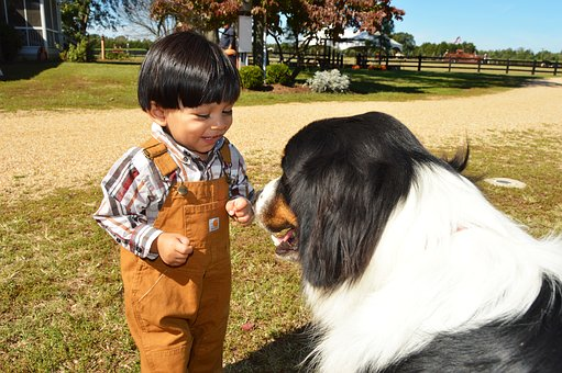 Kids and pets - Boy and dog