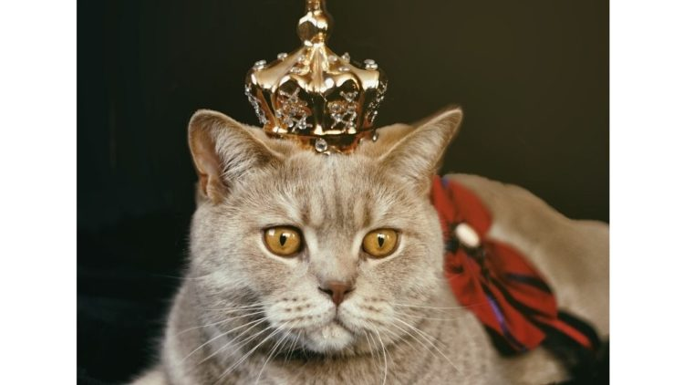 A picture of a cat wearing a Royal crown.