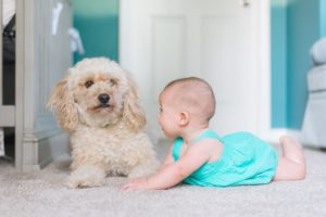A picture of a toddler playing with a dog